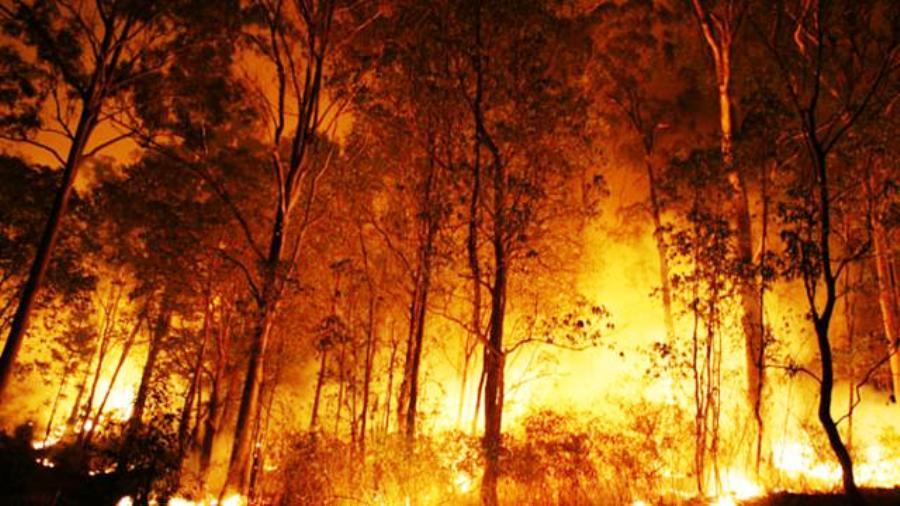 ILUSTRASI. Foto: Liputan6.com