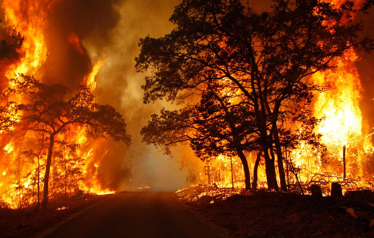 memprihatinkan-ini-akibat-dari-kebakaran-hutan-amazon