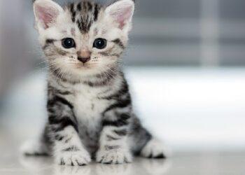 Ilustrasi kucing (Foto: sonoma magazine/Islampos)